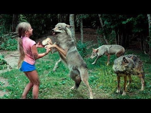 Девочка оказалась одна среди стаи диких волков, то что произошло дальше удивило всех...