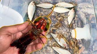 DIY Saltwater FISH TRAP CATCHES Colorful ALIEN SHRIMP!