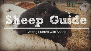 6 Things You Need to Get Started with Sheep