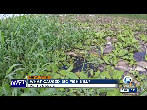 Fish Kill discovered in C-24 Canal in Port St. Lucie, residents dealing with horrible smell