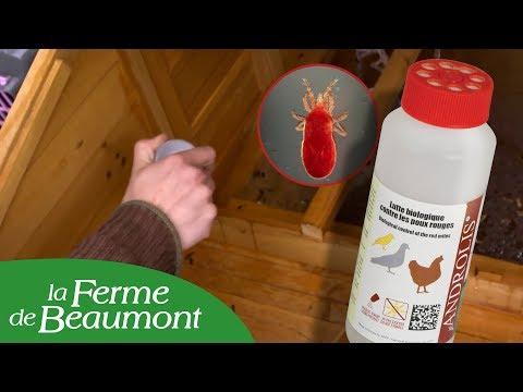 Insecticide biologique Androlis poux rouges poulailler