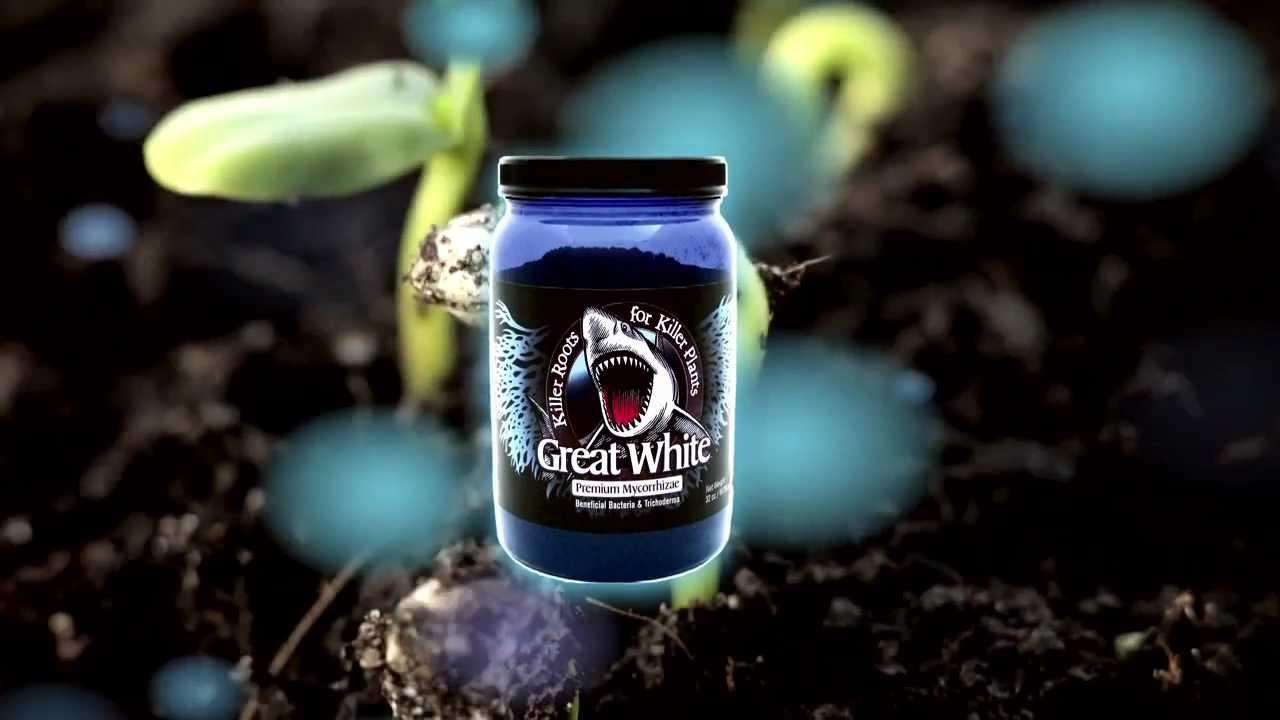 Azos Vs Great White The Bubbling Bucket Presents Myco Shootout Youtube Hydroponic Gardening Hydroponics Presents