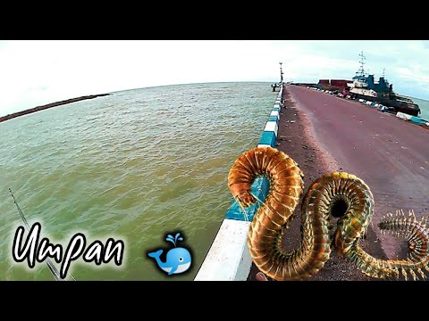 Mancing di pinggir laut pake umpan ini Di Pelabuhan sluke rembang