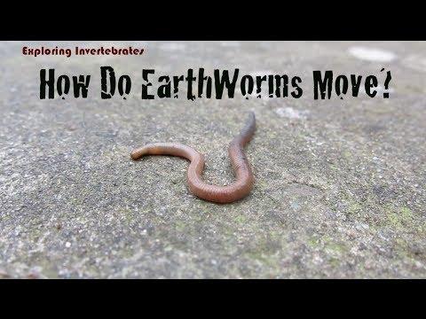 Exploring Invertebrates - How Do Earthworms Move