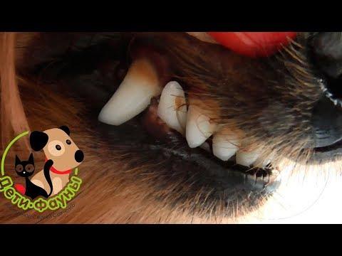 Как убрать запах изо рта у собаки