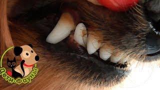 Неприятный запах из пасти у собаки, 9 возможных причин