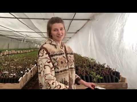 В этом видео мы постарались ответить на ваши популярные вопросы о размножении наших роз.