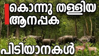 The female elephants leading a herd of elephants | Wildlife video