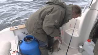 видео Путешествие к Баренцеву морю