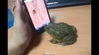 Жаба играет Simulator таракан в андроид (Это настоящий видео)