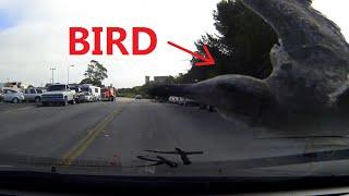 Car Hits Birds 1 38