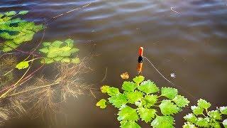 КАРАСЬ тут конечно отменный! Ловля карася в окнах травы. Рыбалка на поплавочную удочку. Рыбалка 2018