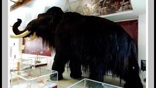 видео Костёнки — археологический музей-заповедник