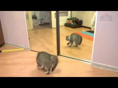 коты и зеркало || cats and mirror