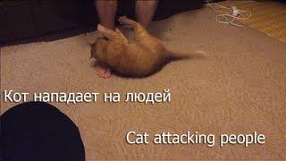 Кот нападает на людей! / Cat attacking people!
