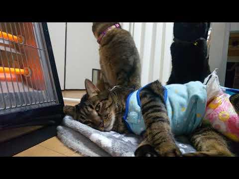 猫達がストーブの前で集会。猫をダメにする機械の威力