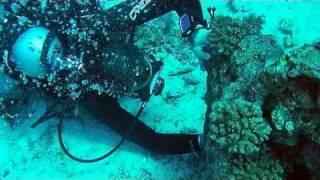 Immersione in Mar Rosso - Hurghada, Egitto