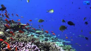 Diving in 4K, Diving with the Sony AX100, Diving Maldives Embudu Trailer
