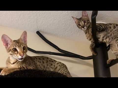 Cute Cats Jumping And Playing/Cute Cat Videos