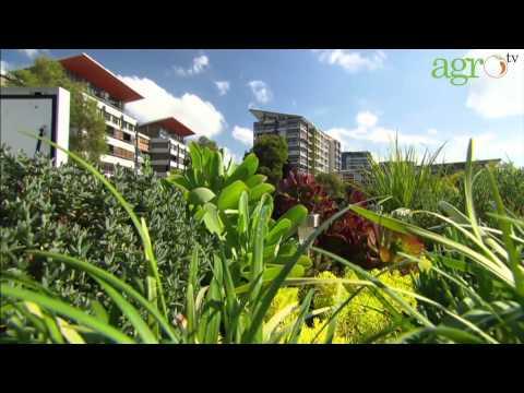 Agro TV-Atap Hijau Berkat Roof Garden