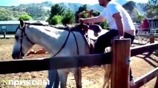 Приколы с лошадьми часть 2