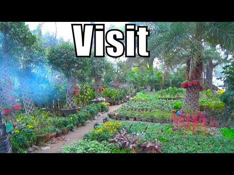 678# Lahore Nursery Visit | Best Cheap Nursery in Lahore Area | Just Visit (Urdu/hindi)