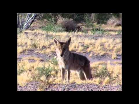 Wildlife in Southern Nevada