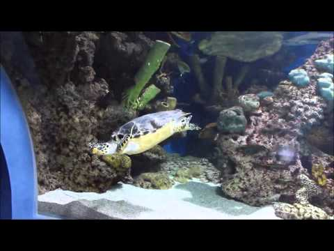 My visit to Fakieh Aquarium, Jeddah, Saudi Arabia