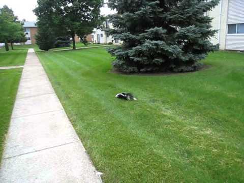 Skunk Saver