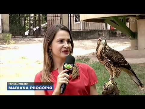 Aves são treinadas para patrulhar Zoológico do Rio