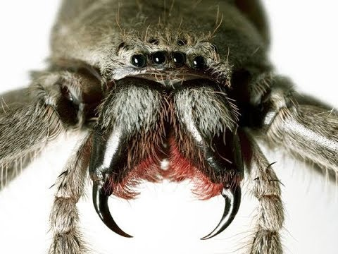 Einheimische Spinnen - Doku / Reportage