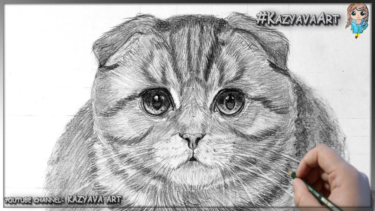Картинки вислоухие котята карандашом