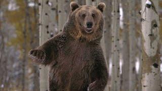 Нейромонах Феофан   Пляски с медведем неофициальный клип