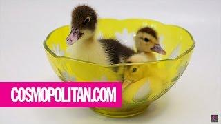 Cutest Animal Sounds Ever | Cosmopolitan