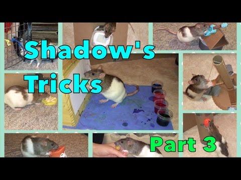 Shadow The Rat's Amazing Tricks Part 3