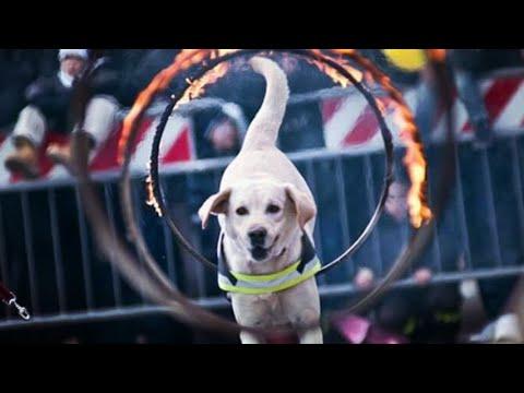 Addio Blu, il cane eroe dei vigili del fuoco che ha donato la sua vita per salvare altre vite