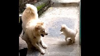 Dog Mom Playing With Her Puppy | Funny Puppies And Cute Puppy Videos