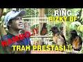 Ternak Murai Batu Trah Prestasi Juara Rambo Ring Rizky Bf Mr Udin  Mp3 - Mp4 Download