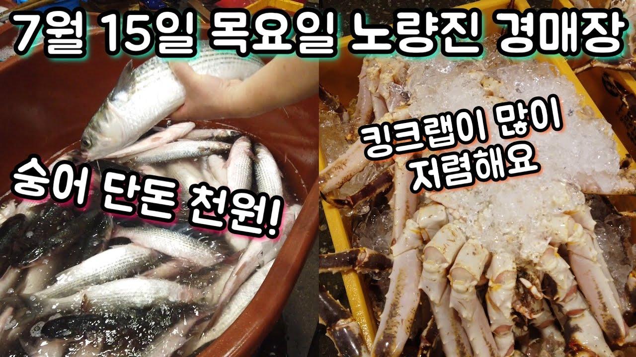 숭어 단돈 천원?! 킹크랩도 싸네요~! 7월 15일 노량진수산시장 최신 동향&시세!