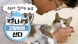 [ENG Sub][Vlog] A cat butler veterinarian's day