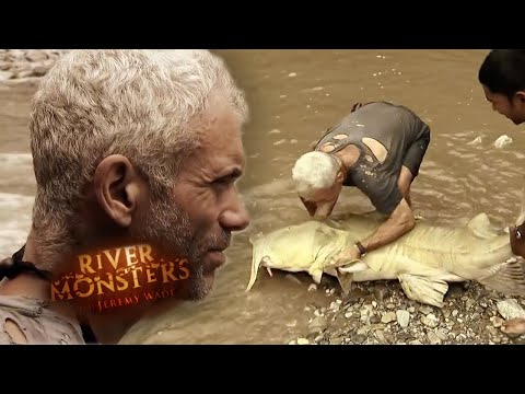 Catching A MONSTER Goonch Catfish | CATFISH | River Monsters