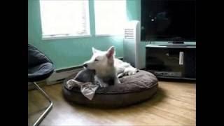 Собака чуть не съела котёнка!