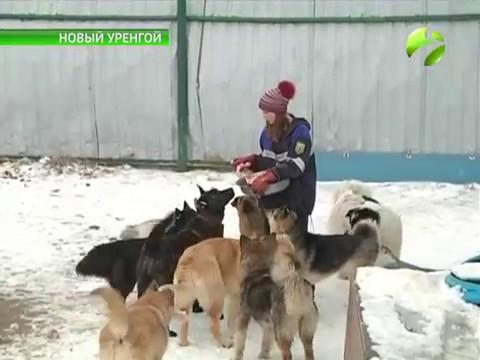 Известный в Новом Уренгое приют для животных переезжает