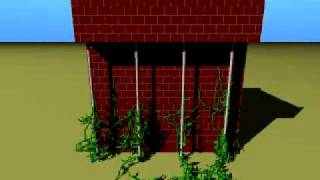 Virtual Climbing Plants Competing For Space