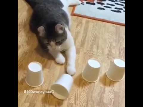 Cat play cup and ball magic trick