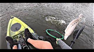 Kayak Fishing for Exotic Clown Knifefish on Lake Ida! Vibe Kayaks Yellowfin 100
