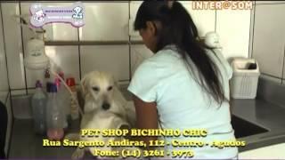 Pet Shop Bichinho Chic - Agudos/SP