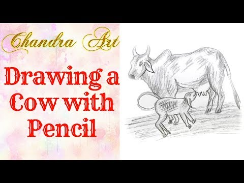 draw a cow with pencil -how to draw a cow face step by step