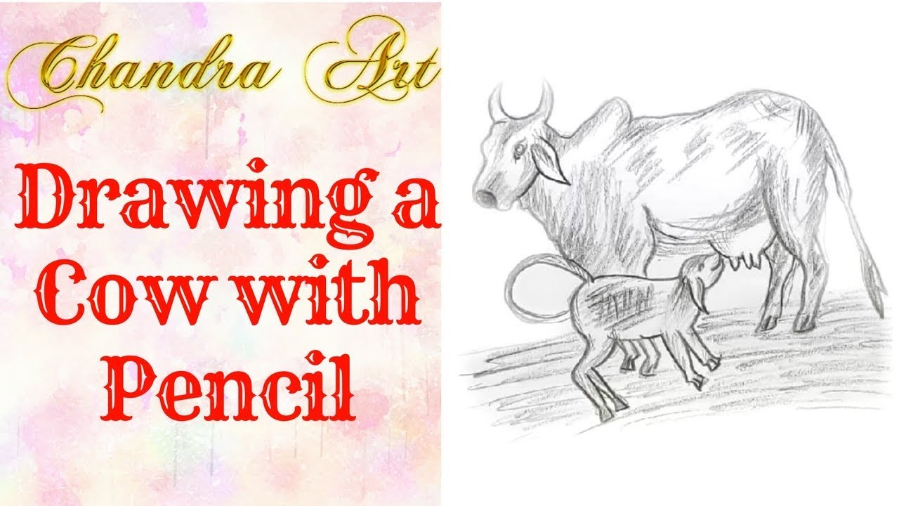 draw a cow with pencil -how to draw a cow face step by step for kids