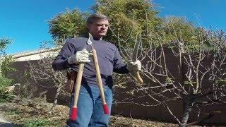 Apple Tree Pruning with Erik Wilson